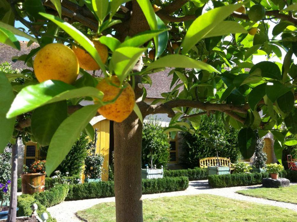 L'Orangerie et ses jardins colorés